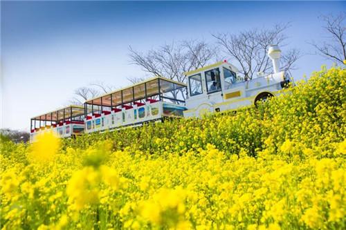 畅游日照花仙子:在花海中邂逅春天